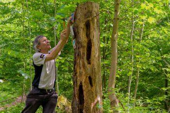 Hans-Jörg Bahmüller bringt ein Wegzeichen an einem Baum an.