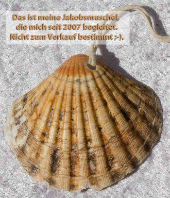 Die Muschel ist das Kennzeichen der Jakobspilger und wurde im Mittelalter auf dem Nachhauseweg getragen.